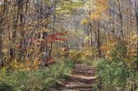 Il ouvre des sentiers à travers les bois.